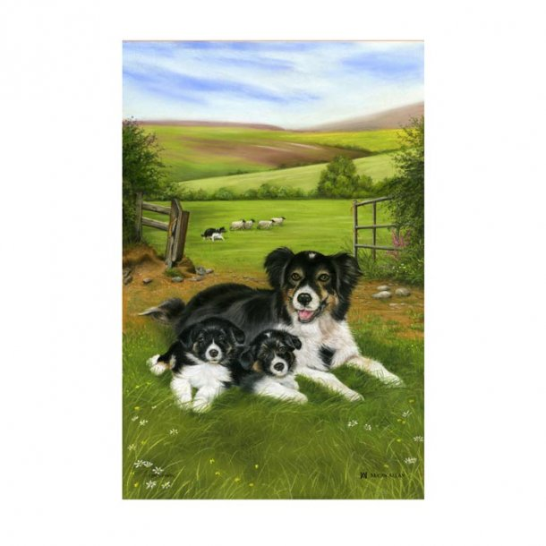 Sheepdog Collie Pups Viskestykke i linned. B 49 x H 74 cm